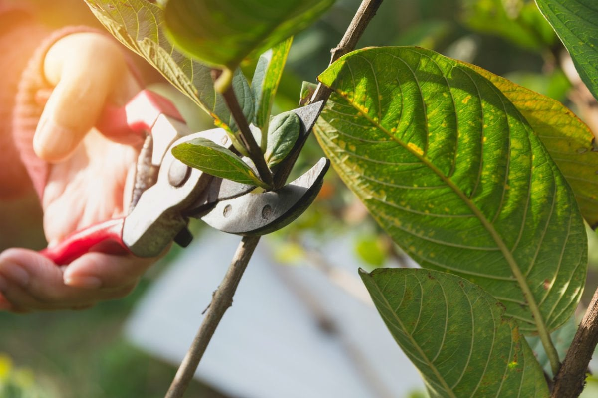 The Best Pruning Shears, According to Gardeners