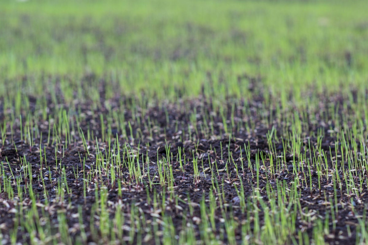 Fast Growing Grass Seed Options Solved Bob Vila
