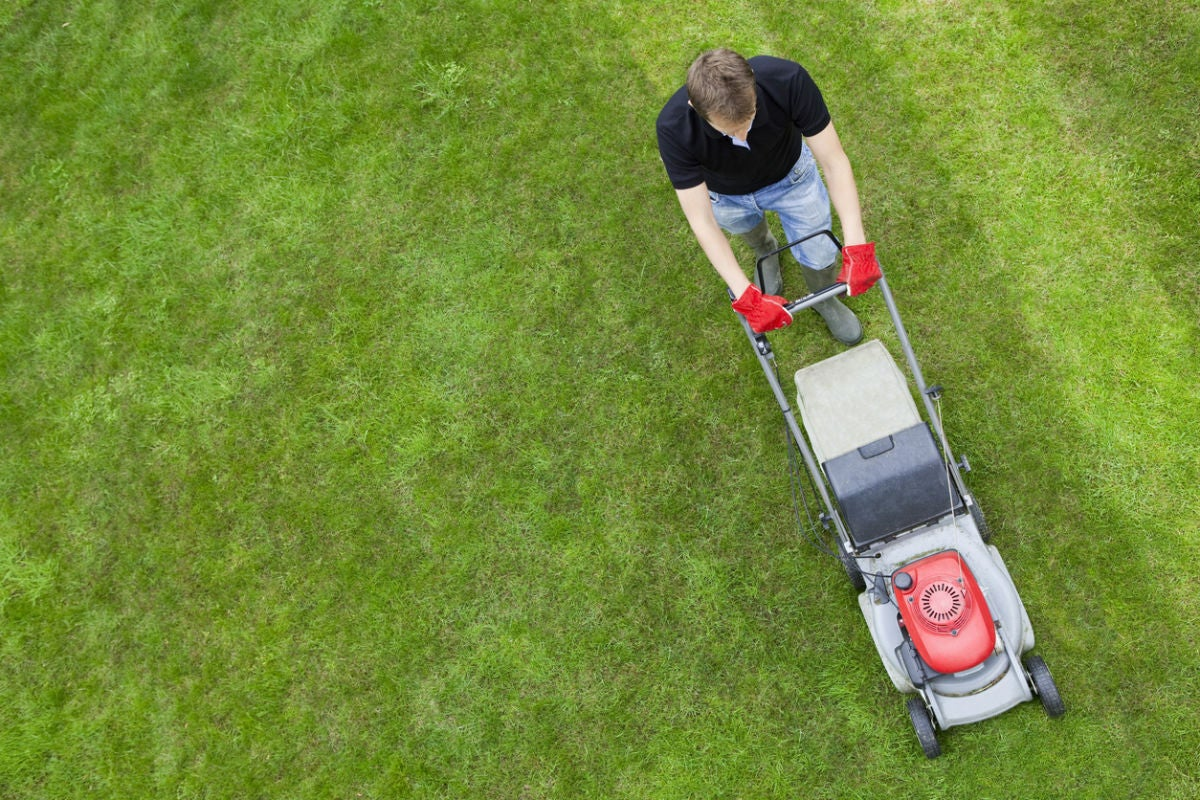 Solved! The Fast-Growing Grass Seeds for a (Nearly) Instant Lawn