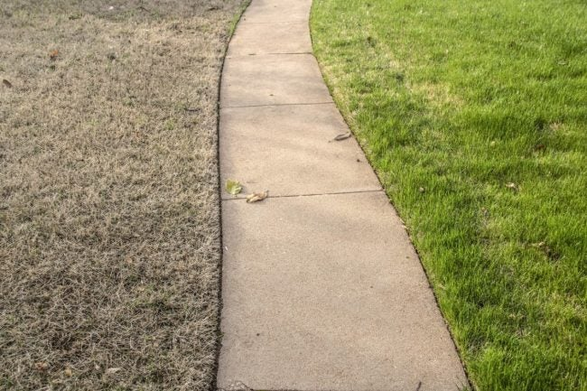Solved The Best Drought Resistant Grass For Dry Summers Bob Vila