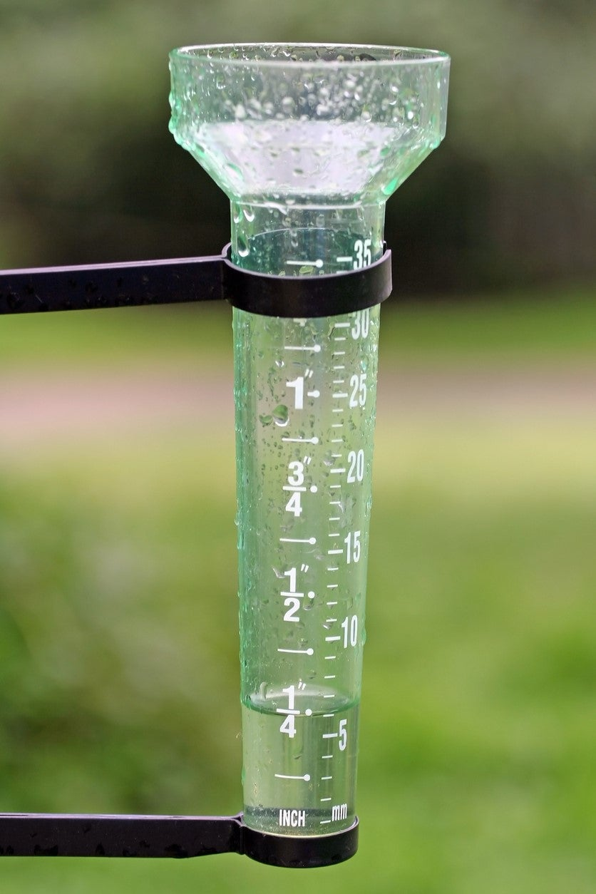 How Long to Water the Lawn If It Has Rained