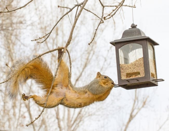 Squirrels in Bird Feeders? Try These 10 Tips
