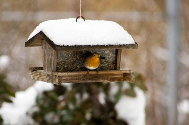 Feeding Birds in Winter? Follow These 10 Tips
