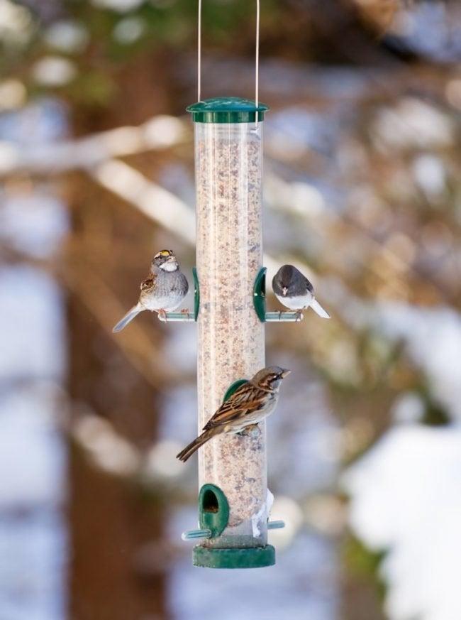 5 Tips for Feeding Birds in Winter