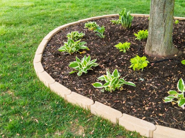 Tips for Mulching the Garden Around Trees