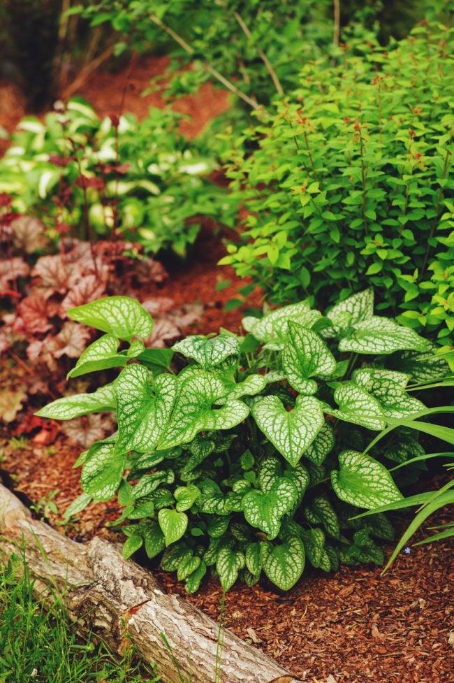 Best Tips for Mulching the Garden