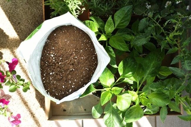 Garden Soil vs. Potting Soil: Which to Use in Your Garden