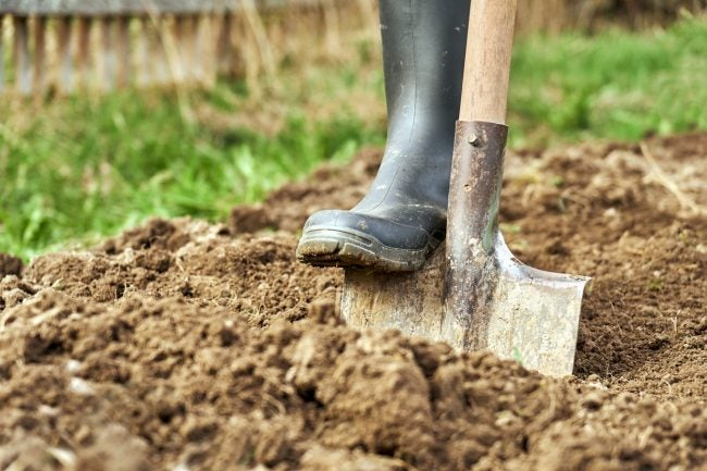 Garden Soil vs. Potting Soil for Flower Beds and Vegetable Gardens