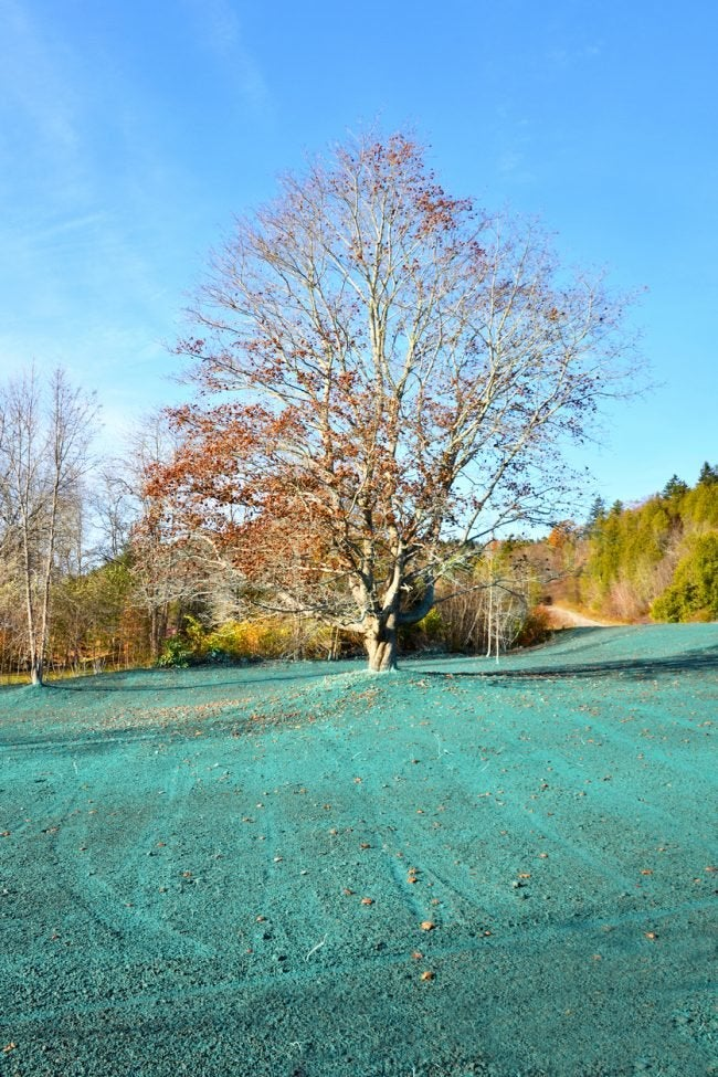 Hydroseeding the Lawn in Fall or Spring