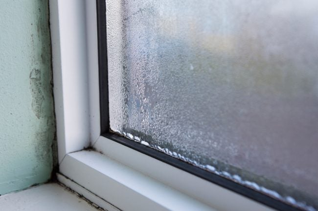 Common Types of Mold in Homes Near Windows