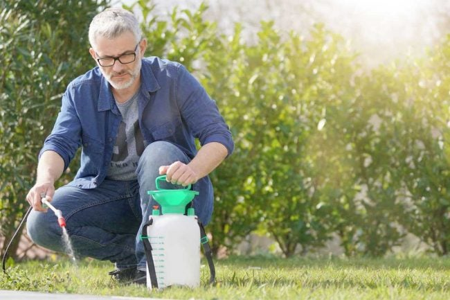 The Best Weed Killer Options