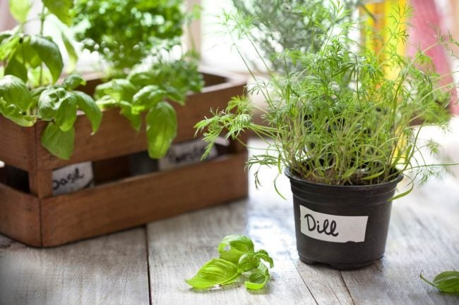12 Secrets for a Successful Indoor Garden