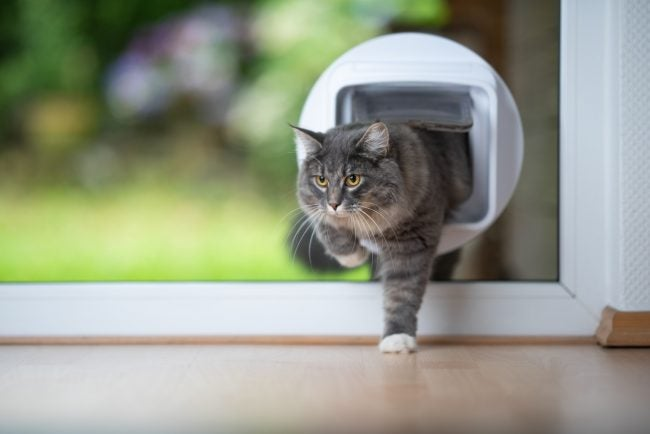 5 Things to Know Before Installing a Pet Door