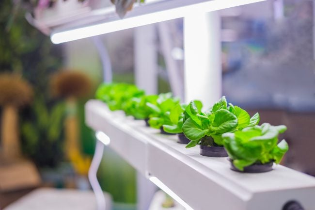 The Best Grow Light Options for Indoor Gardens