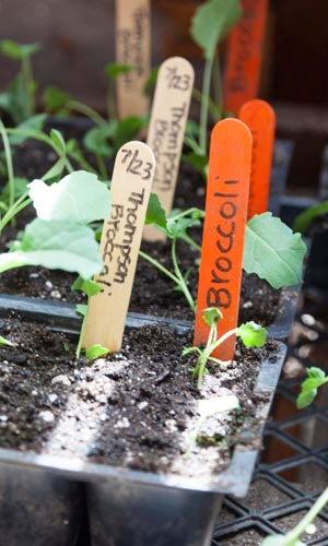 Indoor Gardening: Choosing Containers for Plants