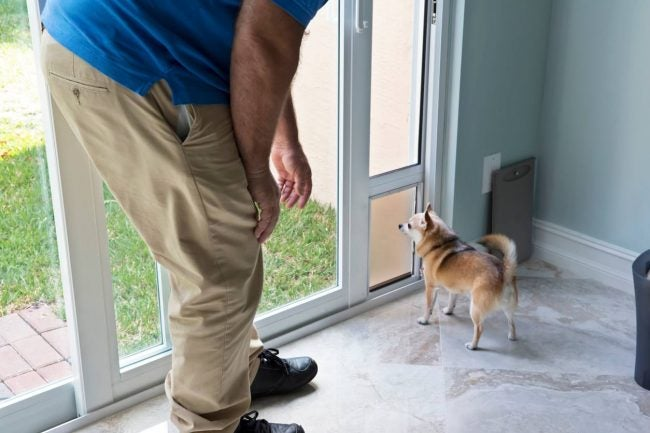 Installing a Pet Door: Pet May Need Encouragement