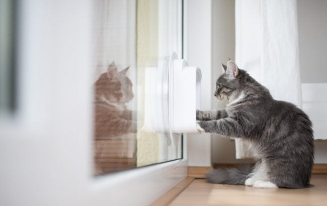 Installing a Pet Door: Size is Essential