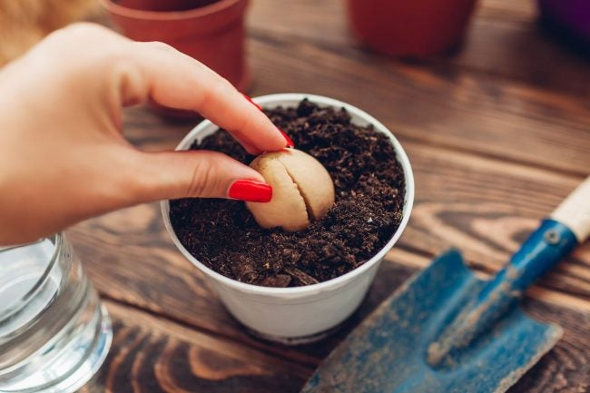 Picking Plants for Indoor Gardening