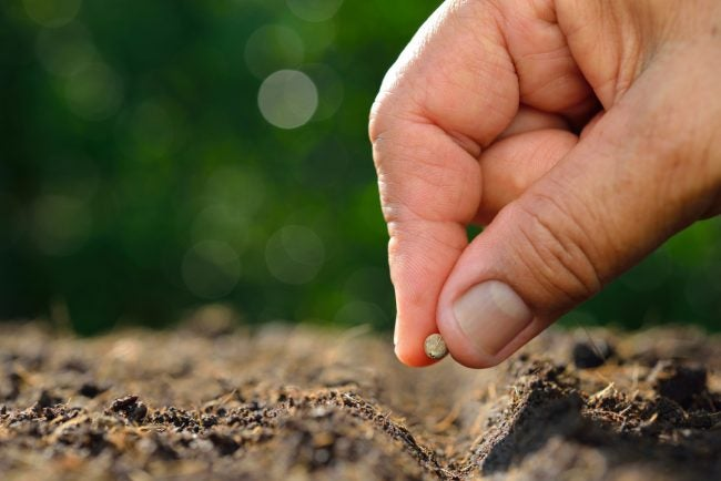 Plan Your Succession Planting Based on the Growing Time of Your Crops