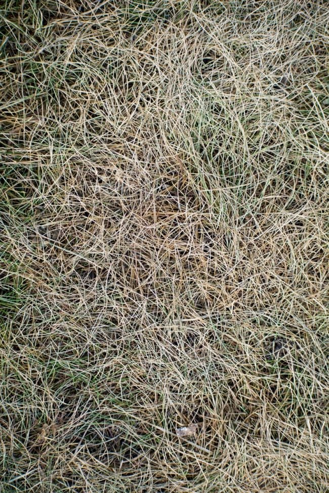 When and How to Dethatch a Lawn