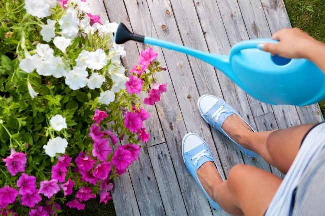 The Best Watering Cans for Indoor and Outdoor Gardening