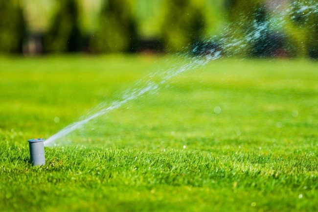 How Long Does it Take to Grow Grass If You Water Lawn Regularly