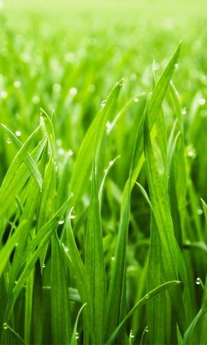 How Long Does it Take to Grow Grass: Cool-season VS Warm-season Grasses
