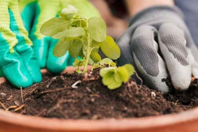 How to Use Compost When Planting in Pot