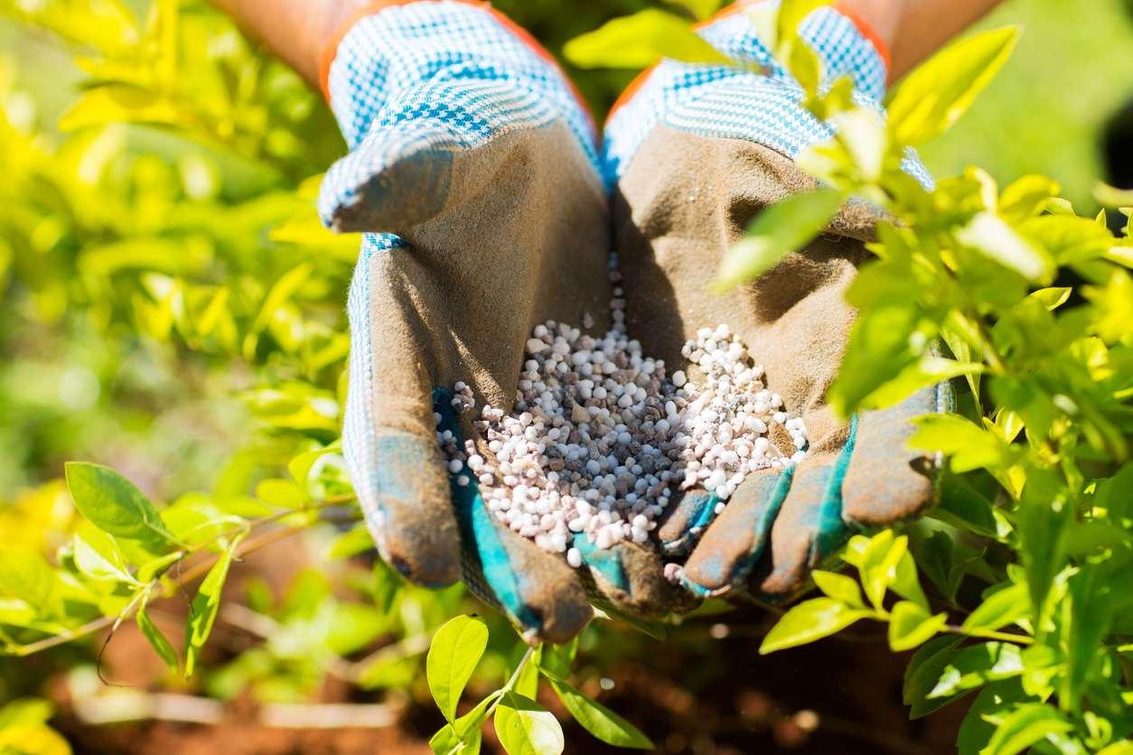 The Best Garden Fertilizer Options For Your Plants Bob Vila