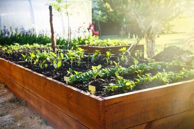 The Best Raised Garden Bed Options