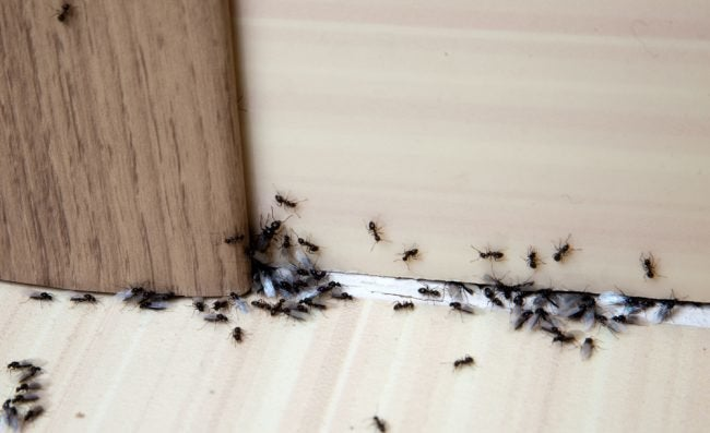 Best Ant Killer Options