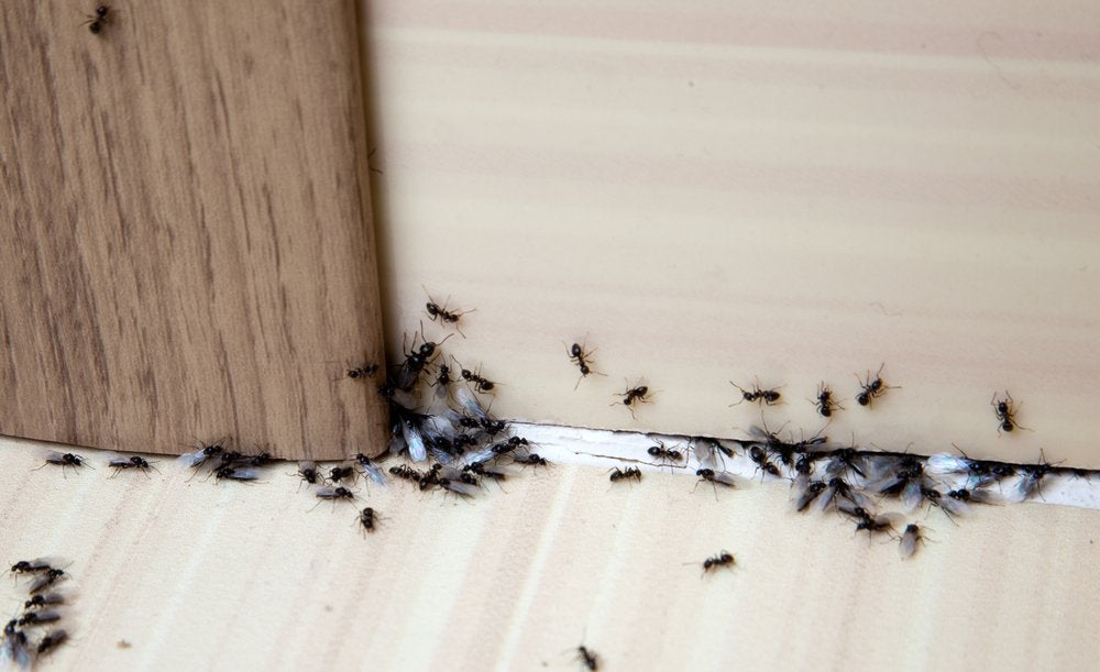 The Best Ant Killer Options For Diy Pest Control Bob Vila