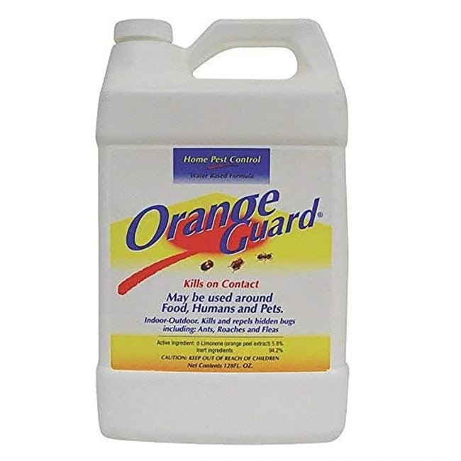 Best Ant Killer Options: Orange Guard