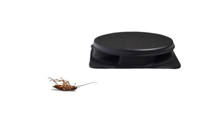 The Best Roach Killer Options