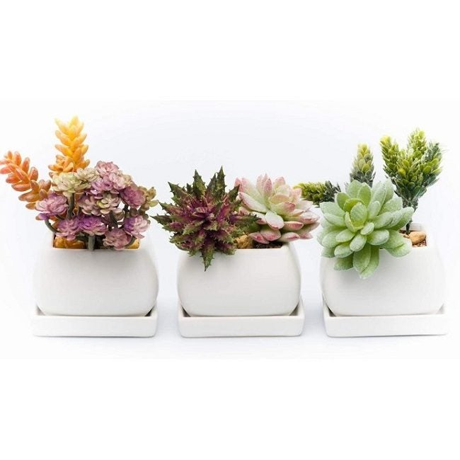 Best Pots For Succulents Kralix