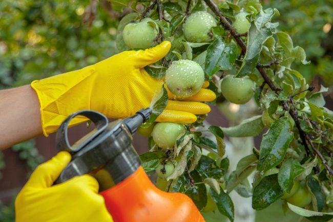 Meilleur insecticide pour les jardins potagers