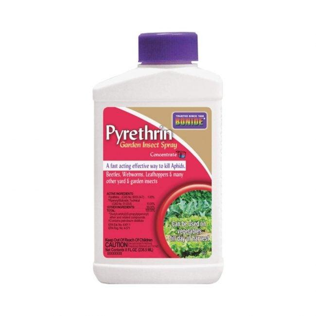 Best Insecticide For Vegetable Gardens Bonide