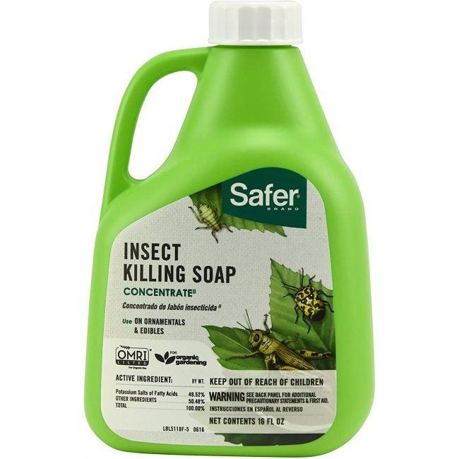 Best Insecticide For Vegetable Gardens Safer