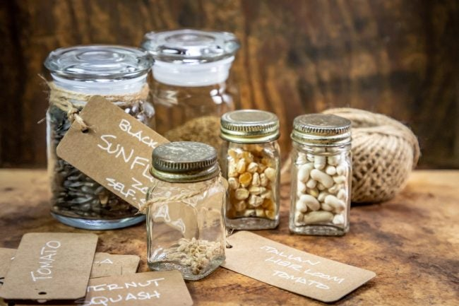 Do Seeds Expire: Seed Storage