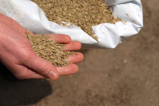 Does Grass Seed Go Bad: Inspecting Grass Seeds