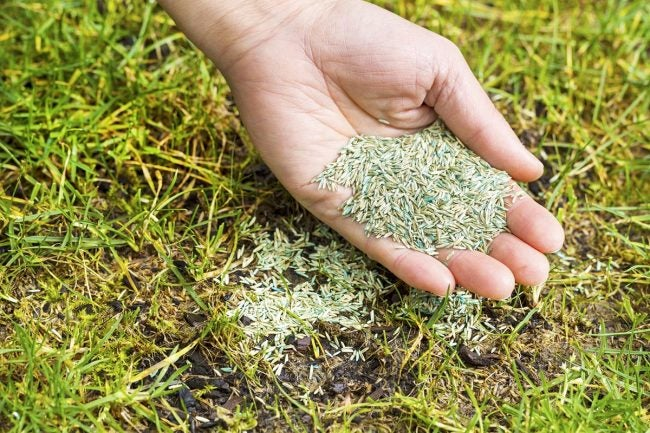 How To Overseed a Lawn: Add the Seeds