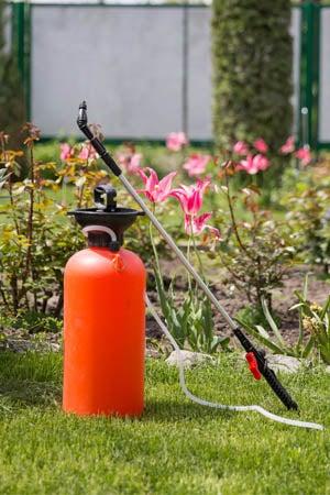 When to Spray Fruit Trees: Types of Sprays