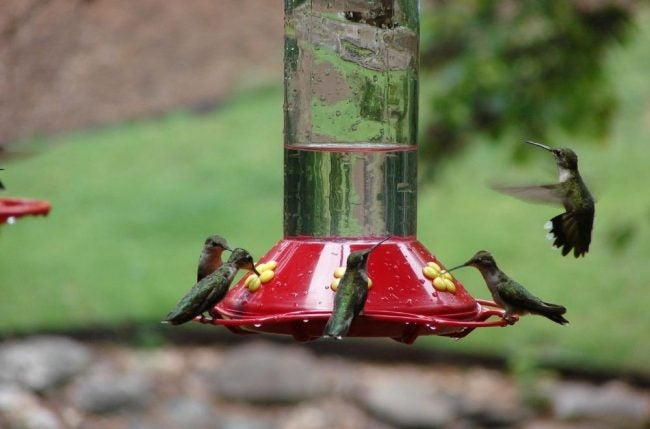 Solved! Where Hummingbirds Live All Year Long