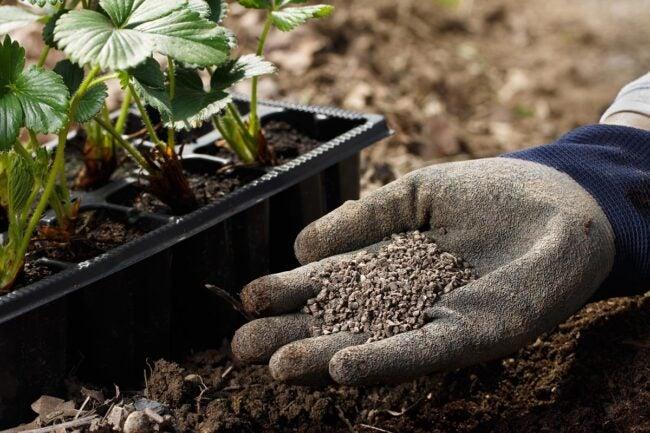 The Best Organic Fertilizer Options