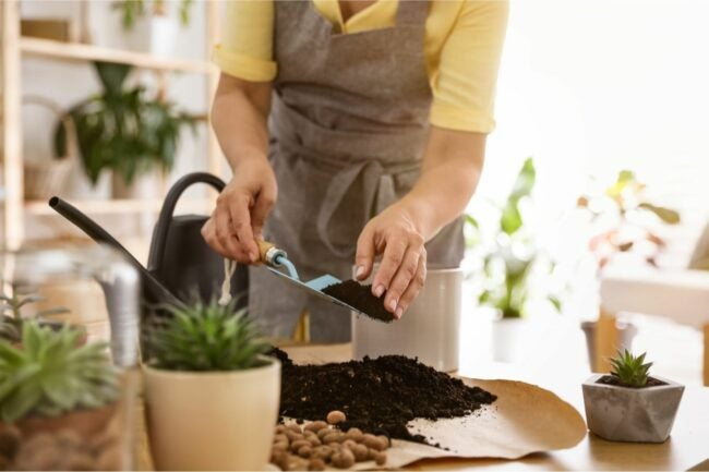 The Best Potting Soil Option
