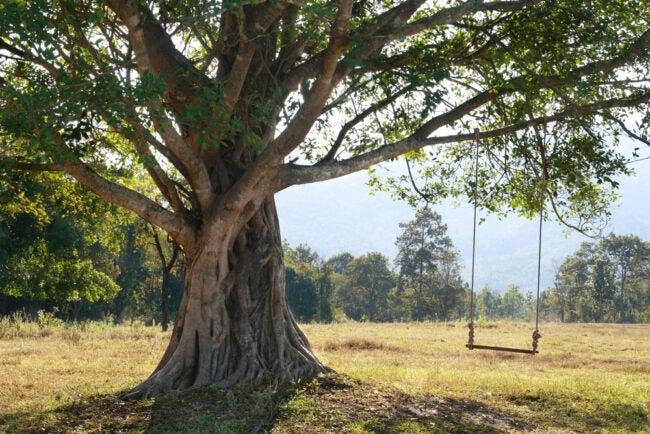 Best Tree Swing Options