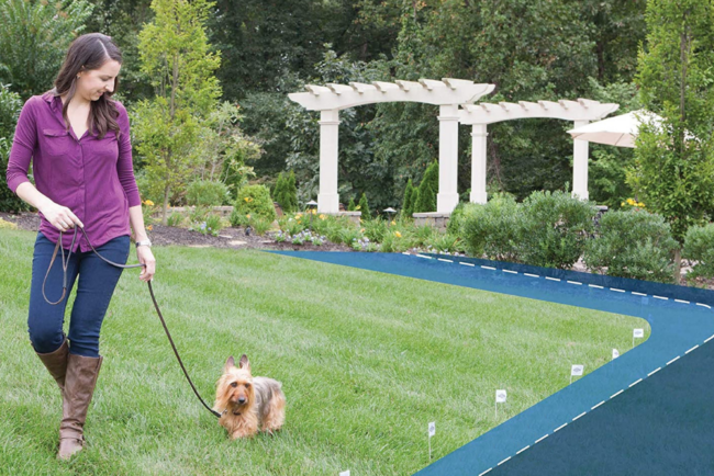 The Best Invisible Dog Fences Options