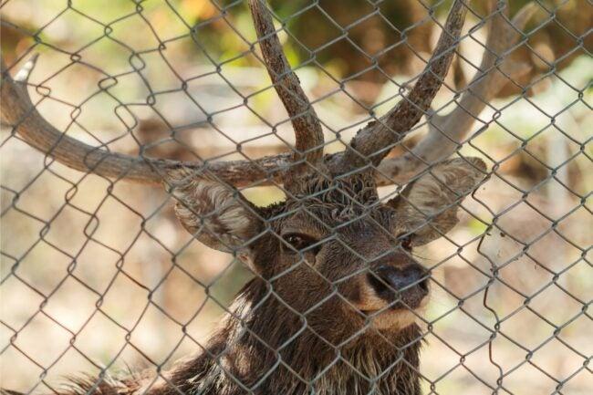 The Best Deer Repellent Option