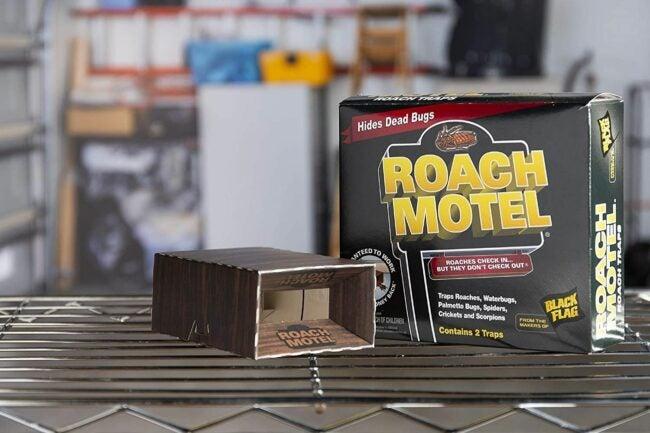 The Best Roach Bait Option