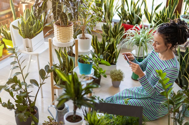 7 Instagrammers Whose Houseplants Have a Cult Following